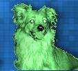 leyko verde : )